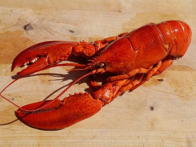 comment cuire un homard